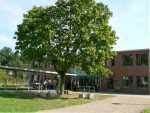 Baum auf dem Schulgelände