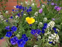 Foto der Wildblumen