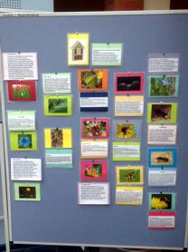 Foto von den Insekten-Memorykarten