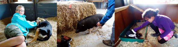 Foto von Schülern mit Tieren auf dem Erlebnisbauernhof