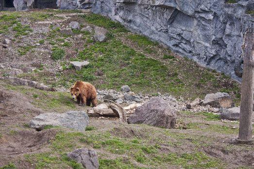 bärenbude