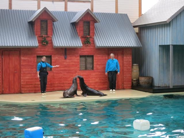 zwei Robben mit Trainern