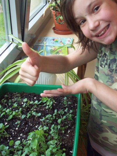 Die Saat beginnt im Klassenraum. Die Freude ist groß, als sich erste grüne Triebe zeigen.