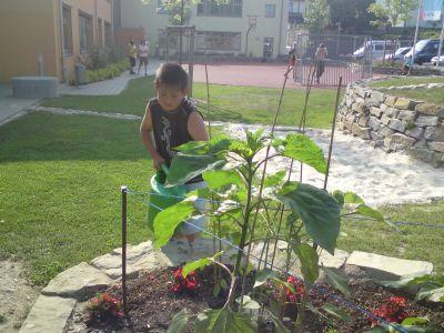 Jede Pflanze möchte gegossen werden.