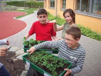 Jetzt sind die Pflanzen bereit für die Außenwelt.