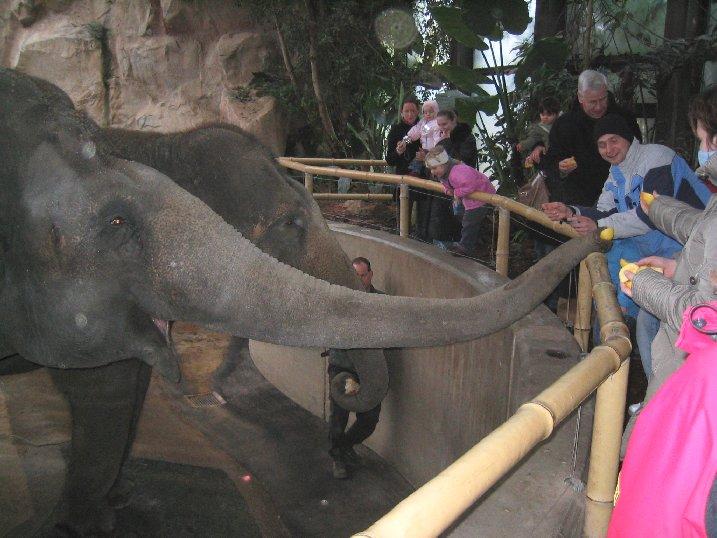 Auch Elefanten haben Hunger.