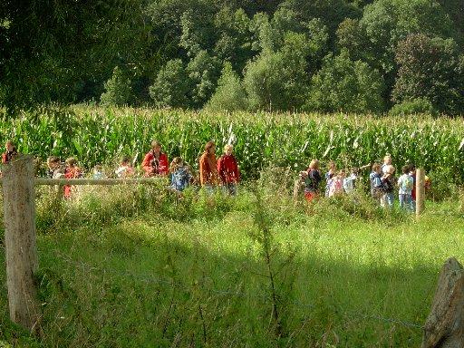 Der Weg führt an wunderschönen Maisfeldern vorbei.