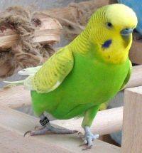birds-online.de