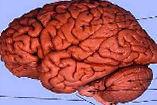 Logo der Veranstaltung: Gehirn