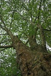 Wie die Äste eines Baumes verzweigen sich die ambulanten Angebote..