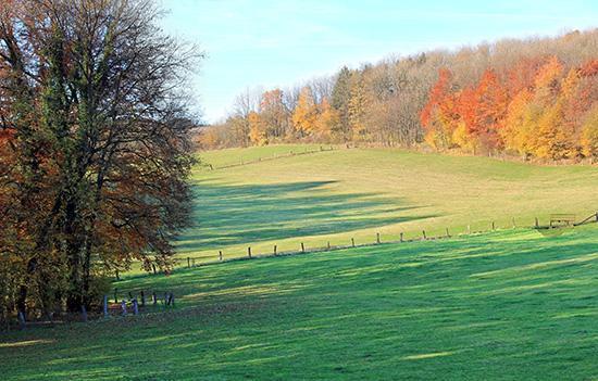 Wiese am Teutoburger Wald nahe des Grünen Raums.
