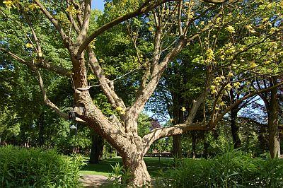 Foto eines Baumes auf dem Klinikgelände
