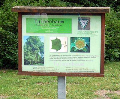 Foto zeigt Schild vor dem Tulpenbaum