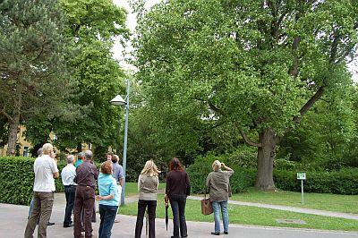 Foto zeigt Personengruppe vor dem Tulpenbaum