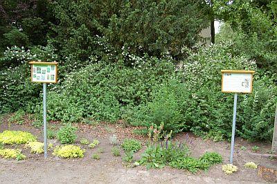 Foto zeigt den Duftgarten