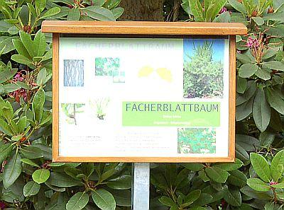 Foto vom Schild des Gingkobaumes (auch Fächerblattbaum genannt)
