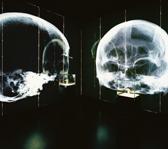 Das Foto zeigt den Evolutionskubus im LWL-Museum für Archäologie. Foto: LWL