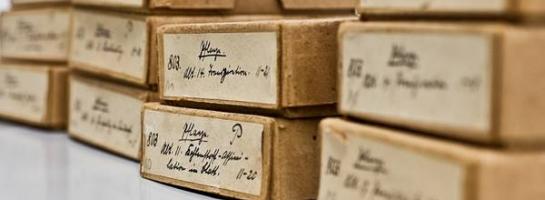 Dieses Bild zeigt eine historische Glasplattensammlung in einer Kühlzelle des Archivs