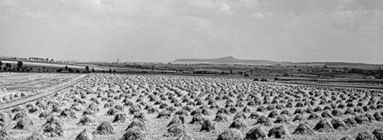Das Bild zeigt ein strohhaufenbedecktes Feld nach der Ernte