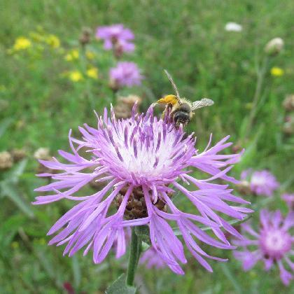Hummelwiese Zollern_1600x900_Ehses.jpg
