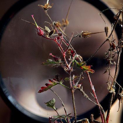 7  Lupe Pflanze1600x900.jpg