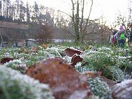 Bilddatei: winter_191.jpg