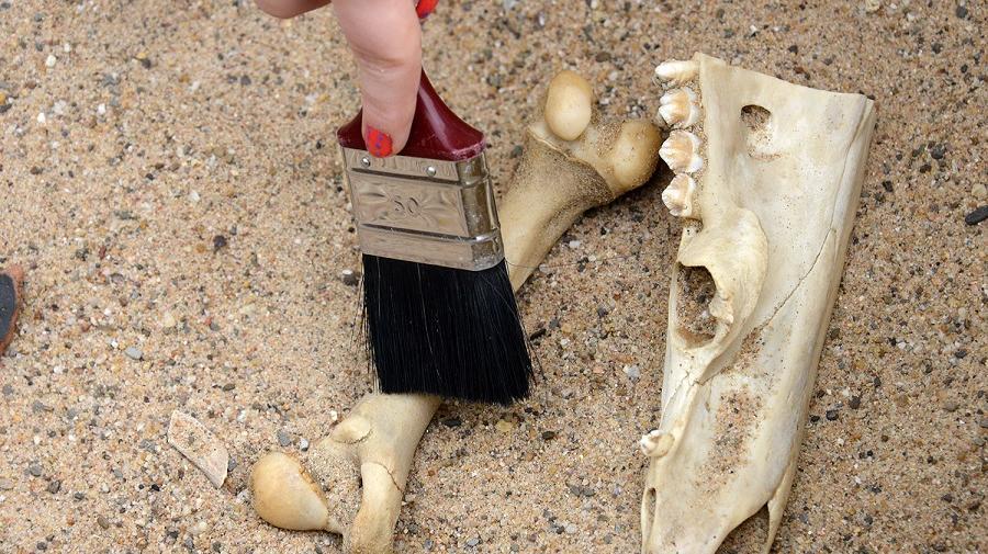 Knochen werden im Sand ausegraben