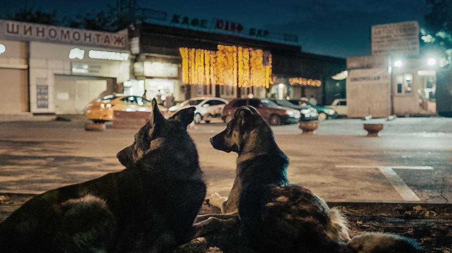 spacedogs-still-01-mainstill(C)Copyright RAUMZEITFILM.jpg