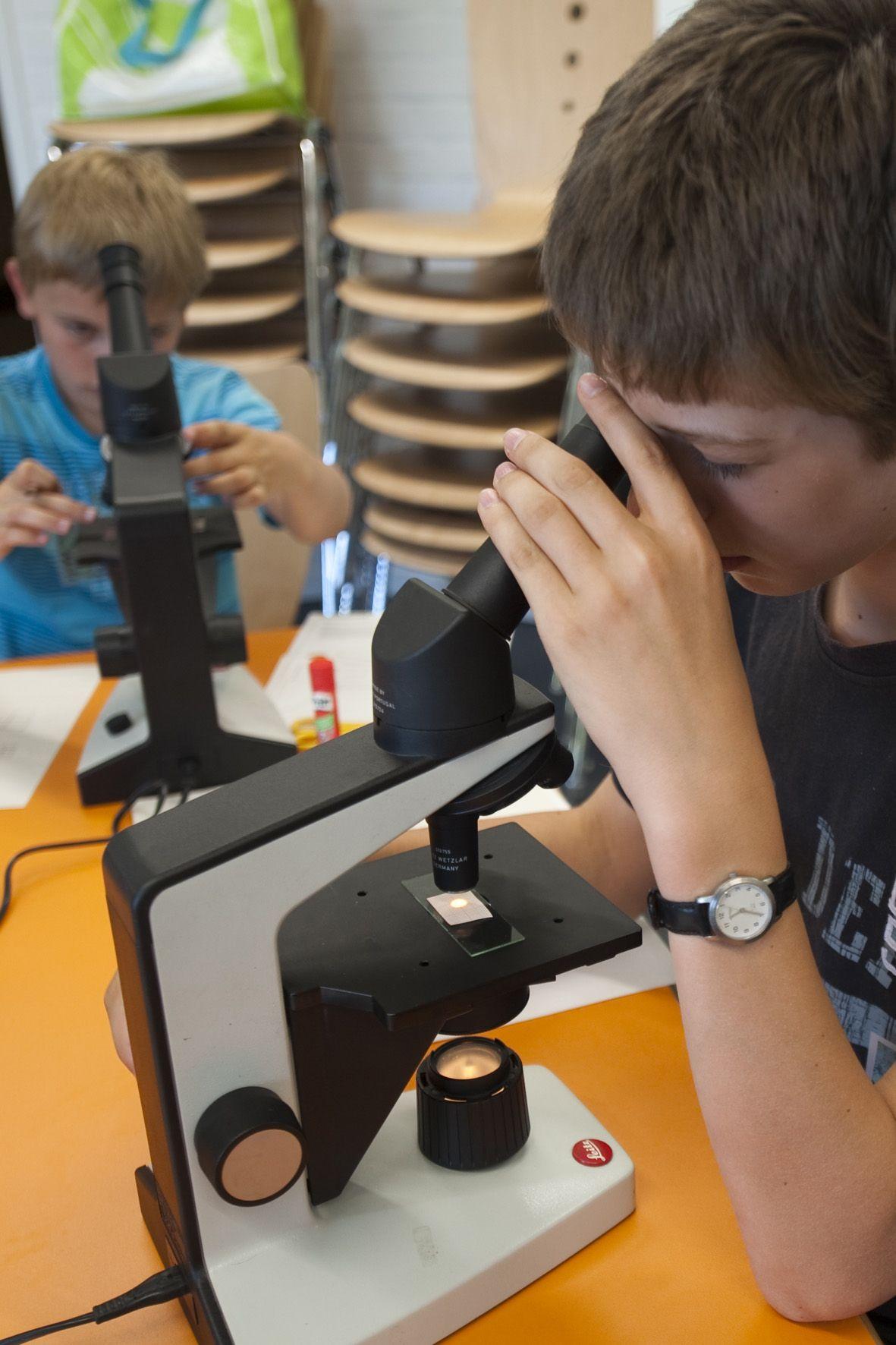 Bilddatei: Mikroskopie(C)LWL,Oblonczyk.jpg