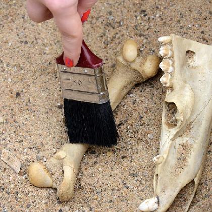 Knochenfunde im Sand