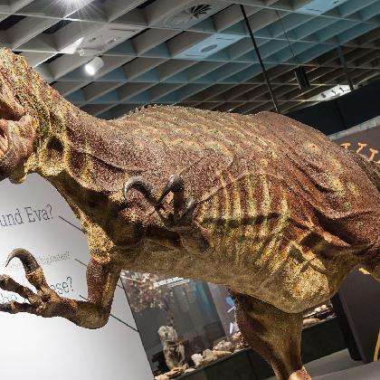 Allosaurus2014-kl(c)Steinweg,LWL_001.jpg