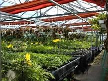 Auf dem Bild ist das Innere des Gartenhauses der Gärtnerei zu sehen. Viele verschiedene Pflanzen werden hier gezüchtet.