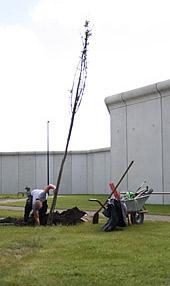 Baumpflanzung mit Mauer im Hintergrund