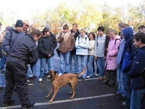 Die Hunde lernen spielerisch - die Schüler sind beeindruckt