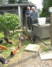 Das Foto zeigt zwei Personen beim Füttern der Hühner.