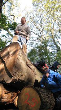 Schüler sind auf einem Baumstamm