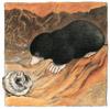 Bild aus dem Kinderbuch 'Kalle der Maulwurf'